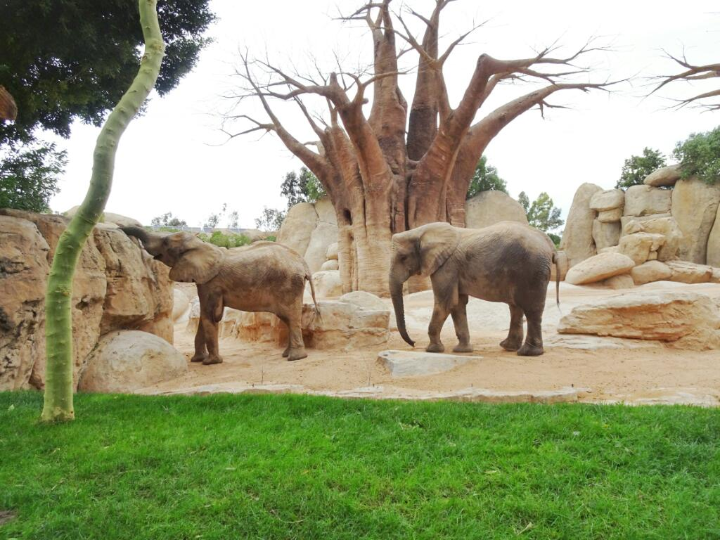 Elephants at Bioparc Valencia